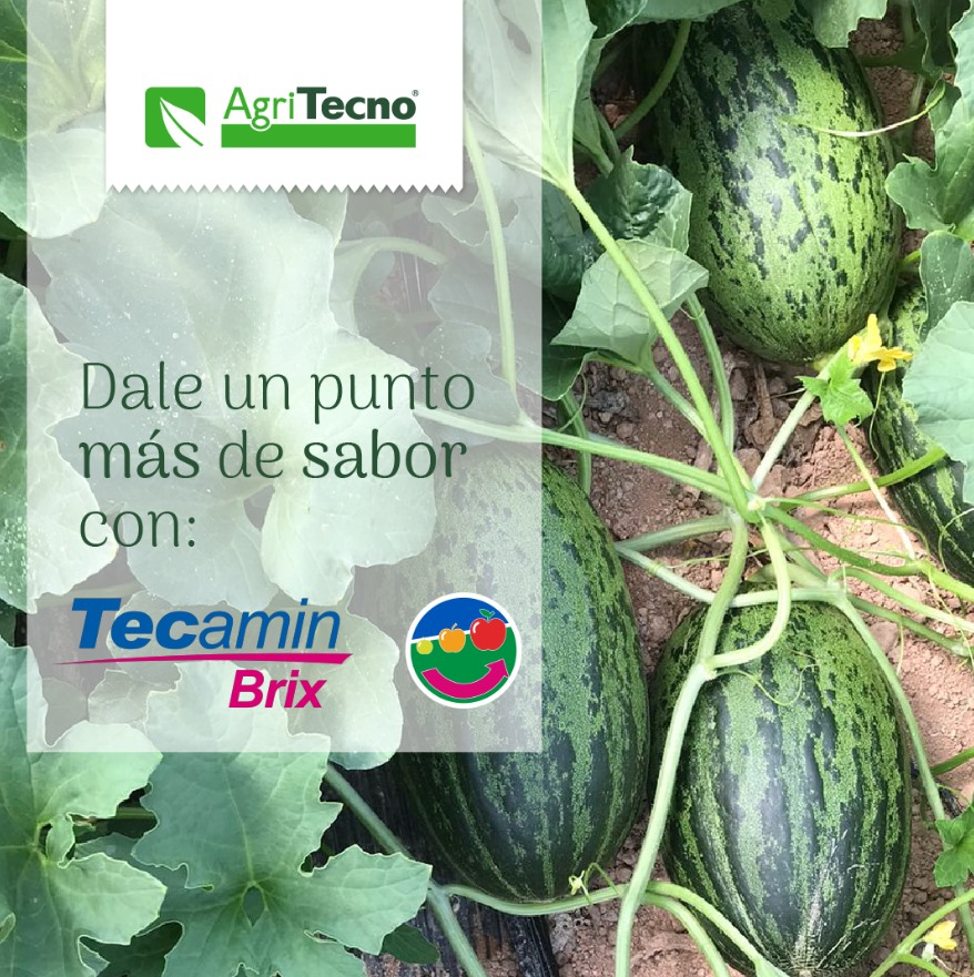 #TecaminBrix #Biostimulant based on potassium and boron for the qualitative development of the fruit, with saccharides and precursor molecules of ripening factors.    #TecaminBrix #Biostimulante a b…